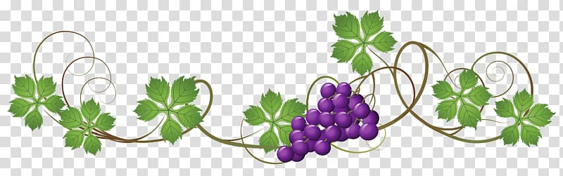 Illustration of purple grapes, Common Grape Vine Juice.