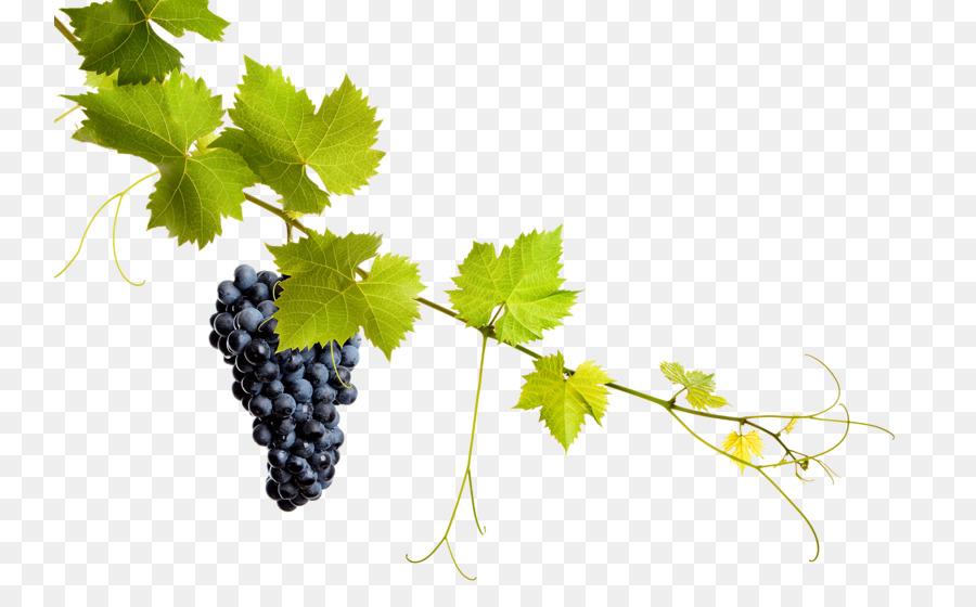 Grapes Cartoon png download.