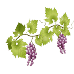 Grapes on Vine transparent PNG.