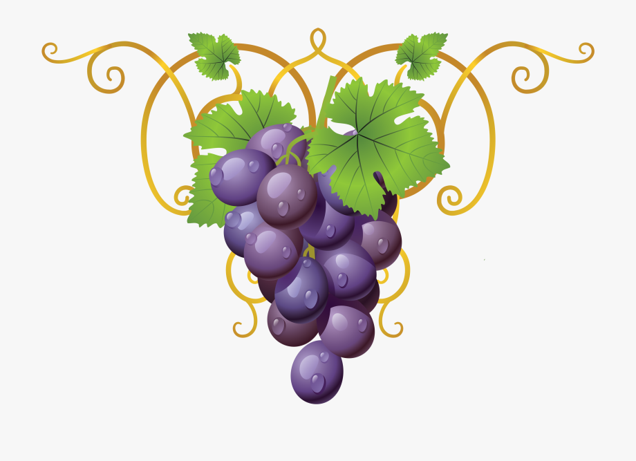 Grapevine Clipart Transparent.