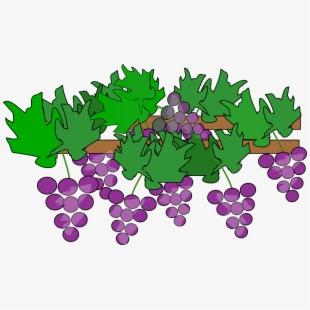 Vine Clipart Grape #1091221.