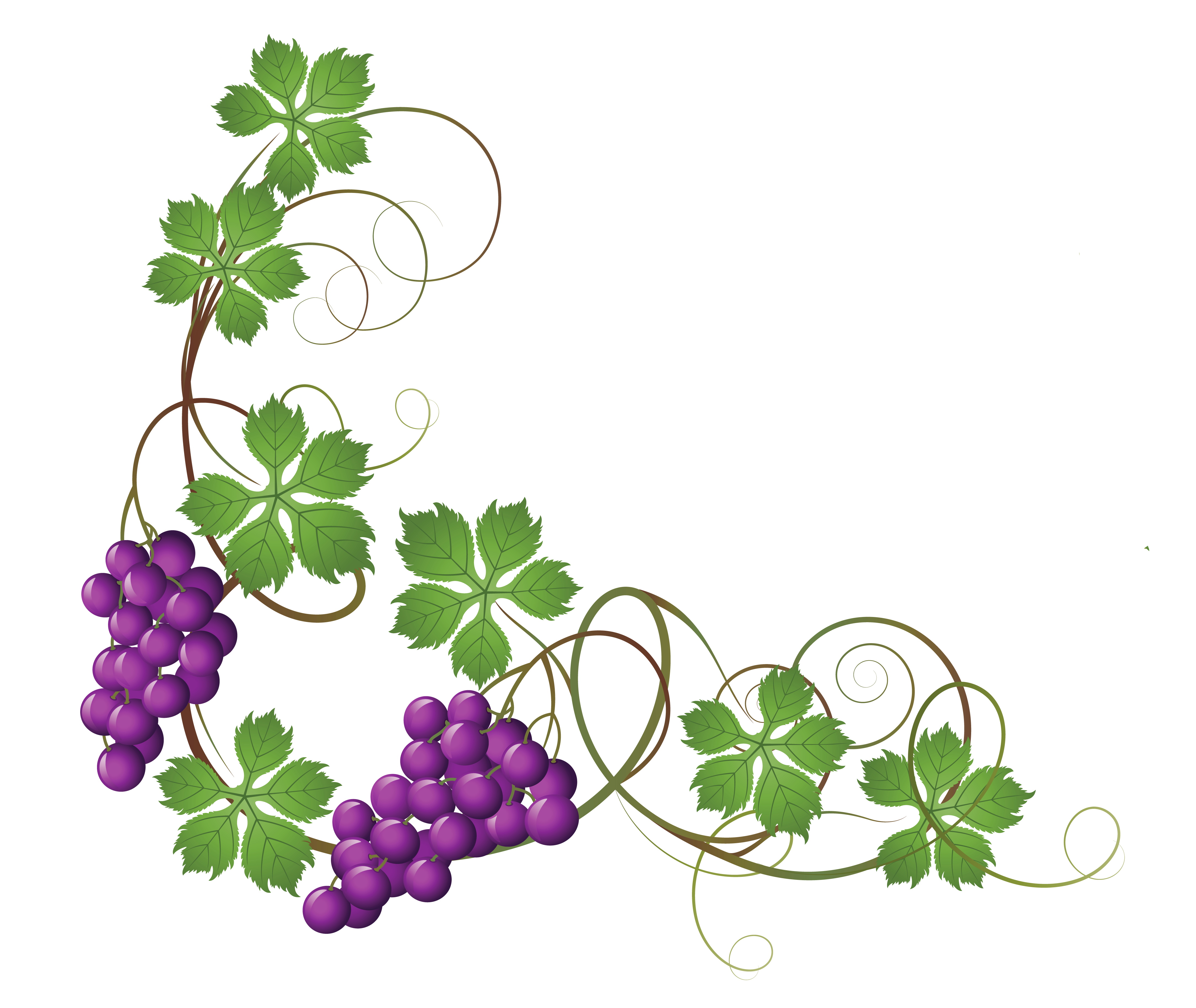 Free grape vine clip art clipart images gallery for free download.