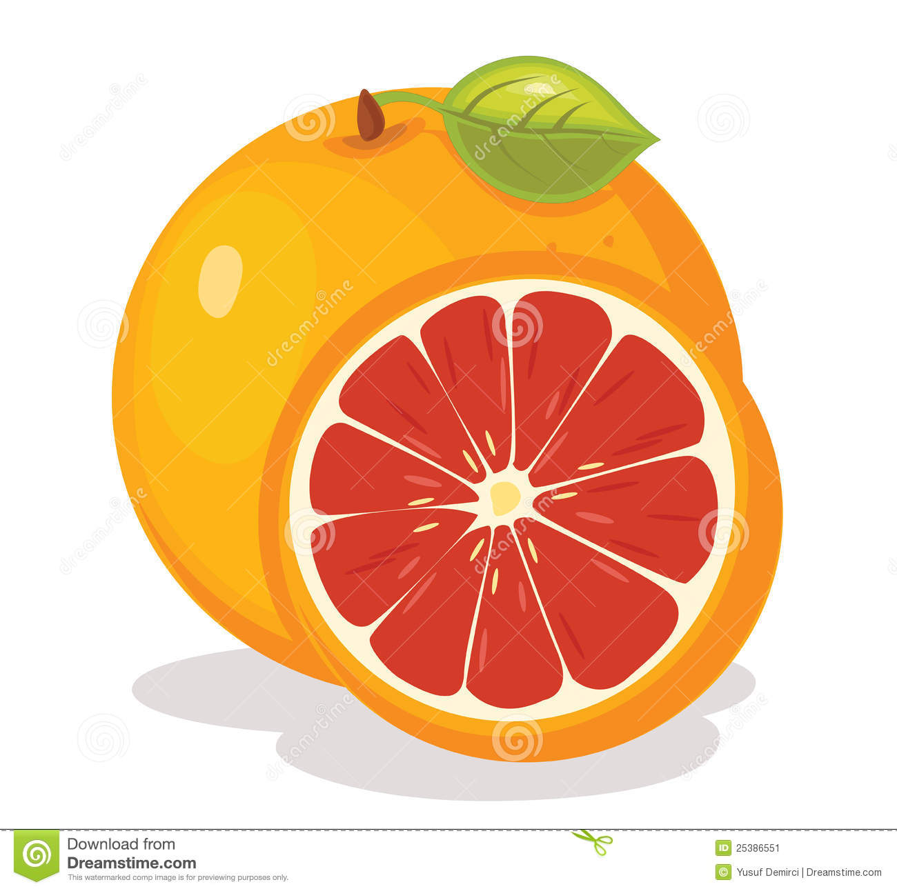 Grapefruit Stock Illustrations.