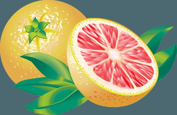 Clip Art of Citrus Fruit: Grapefruit.