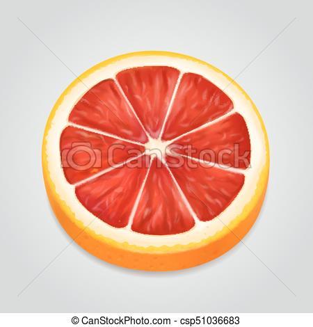 Grapefruit fruit slice realistic 3d illustration Vector.