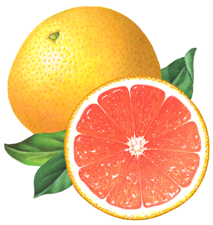 Pin on Lemon, Lime and Grapefruit Illustrations.