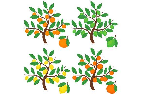 Citrus Trees ~ Illustrations on Creative Market.