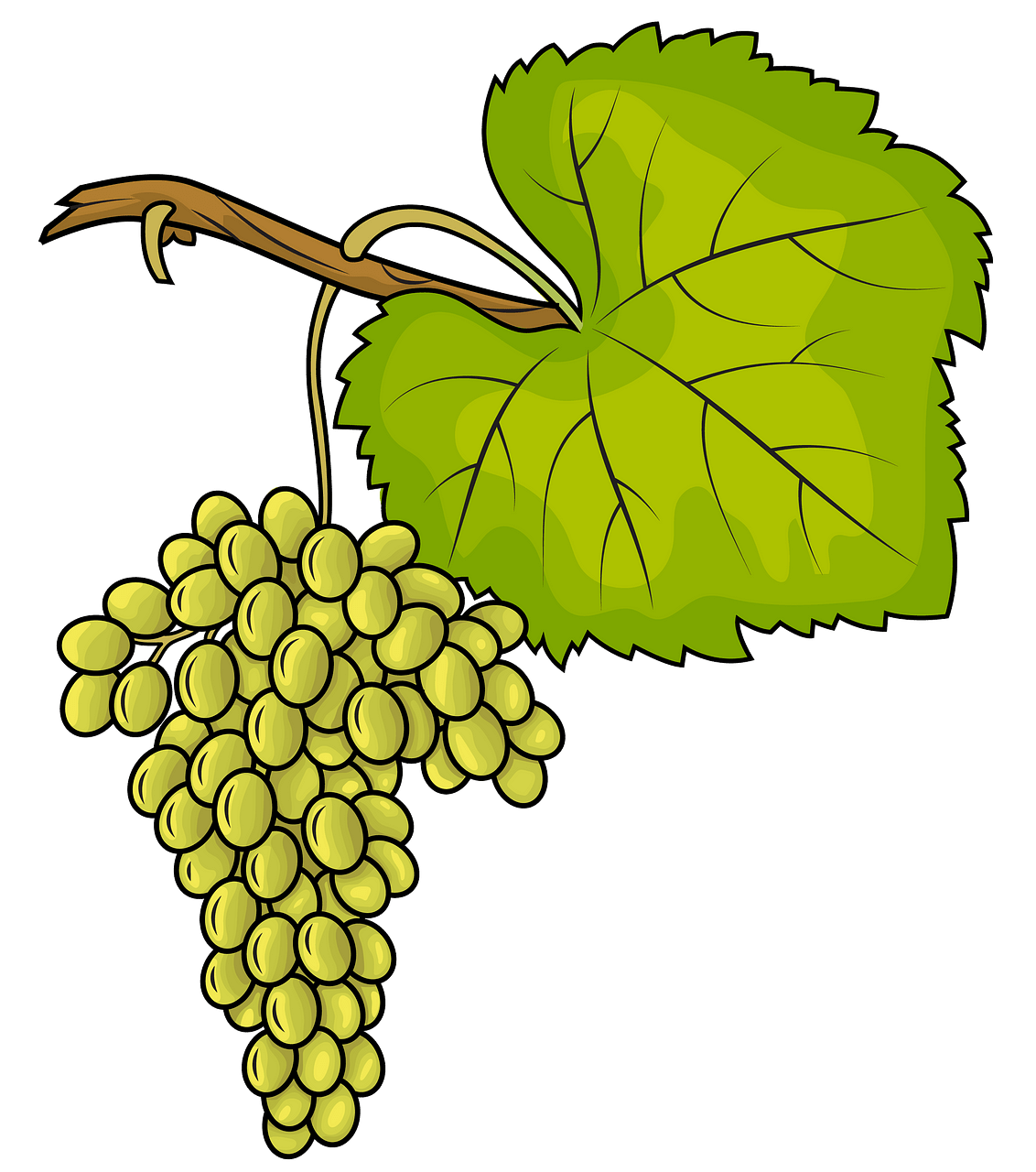 White Grapes clipart. Free download..