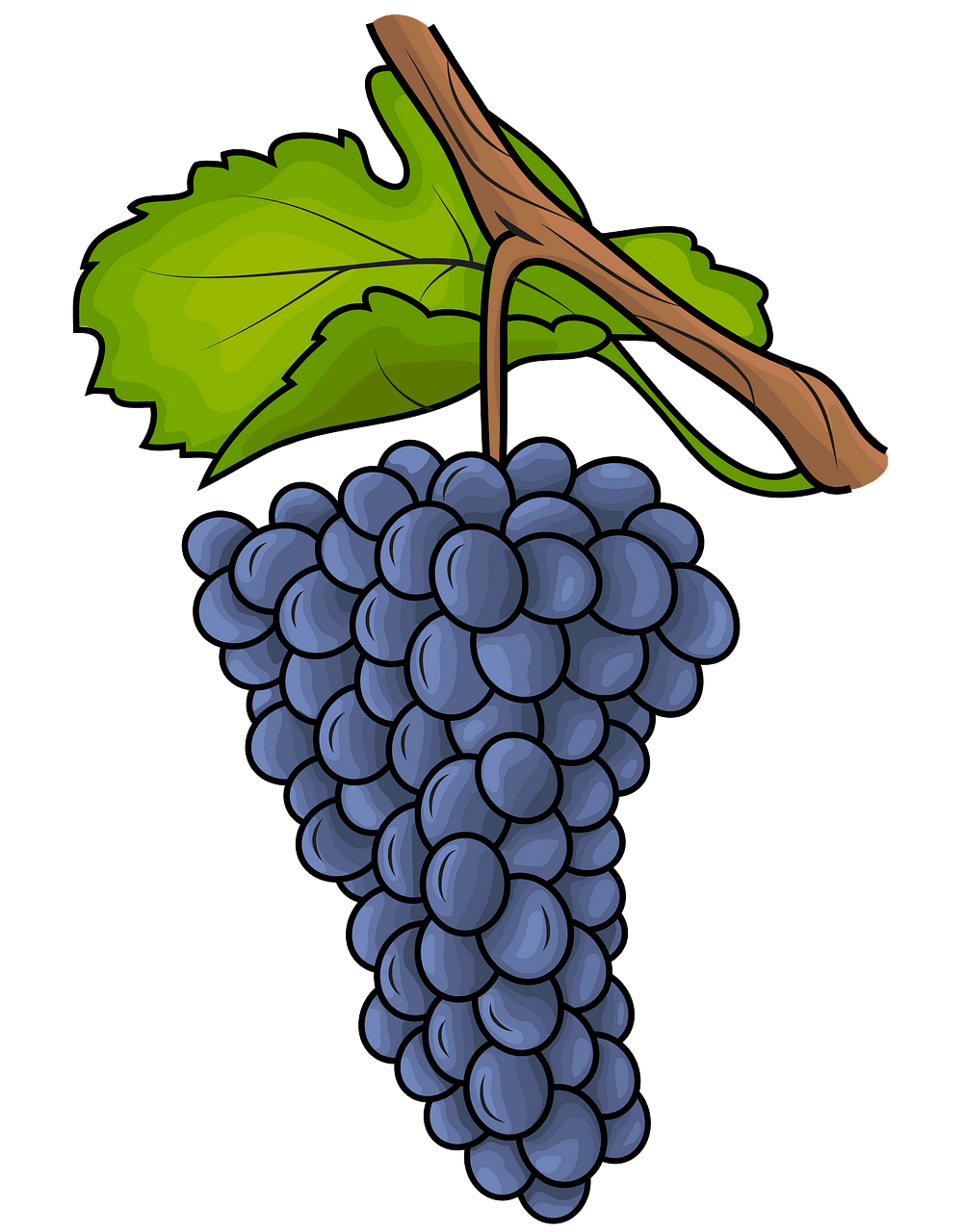 Grapes clipart. Free download..