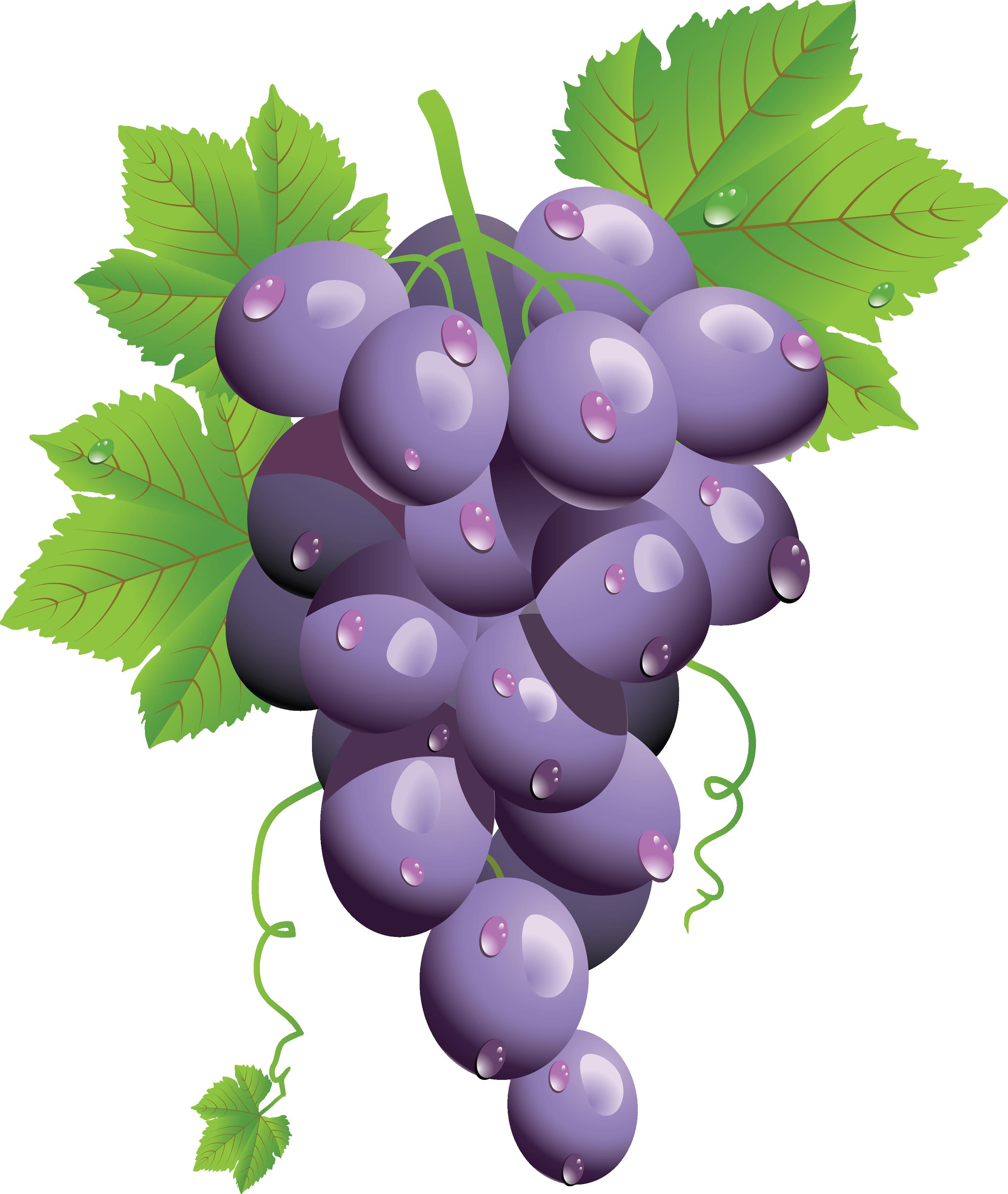 Grape Clipart Png.