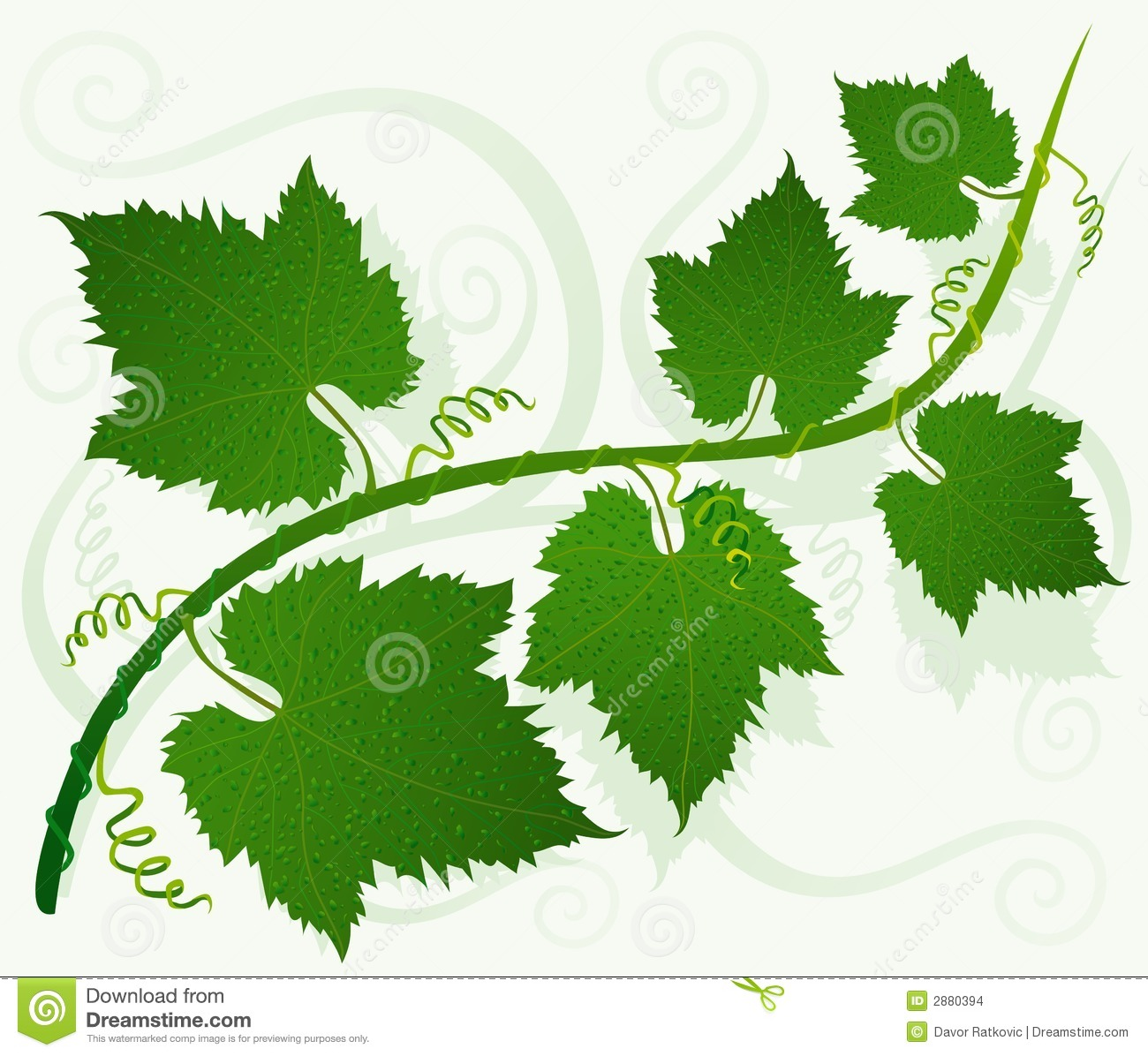 Grape Leaves Stock Illustrations.