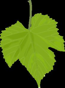Grape Leaf Clip Art at Clker.com.