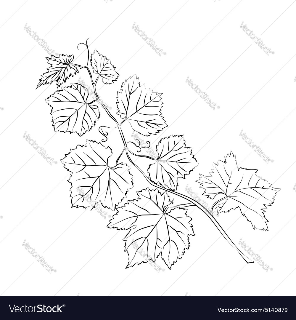 Grape Leaves baroque plants Royalty Free Vector Image.