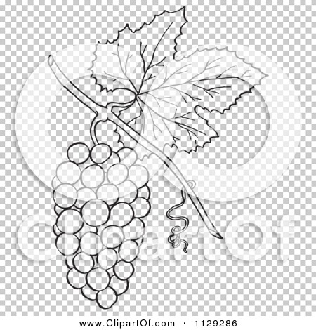 Cartoon Clipart Of An Outlined Bunch Of Grapes With A Leaf.
