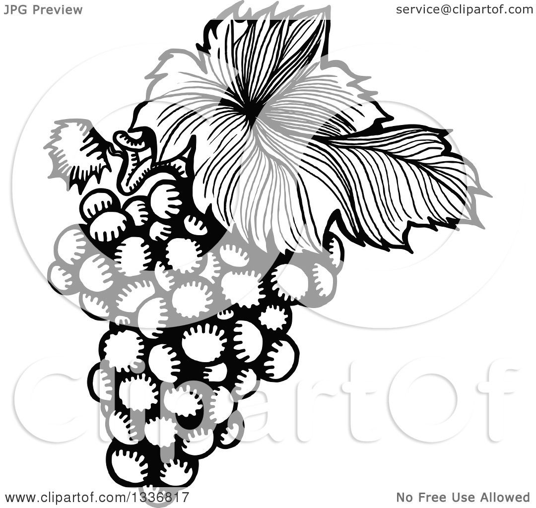 Clipart of a Sketched Black and White Doodle of a Leaf and Bunch.
