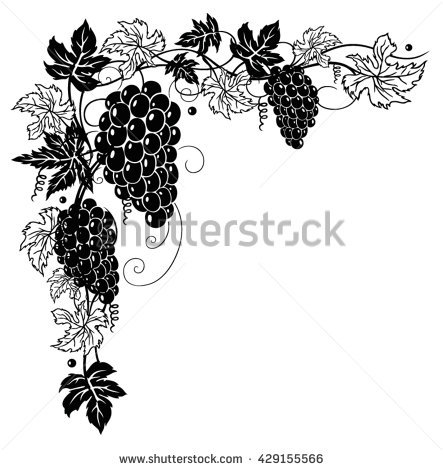 Grape Vine Vector Stock Images, Royalty.