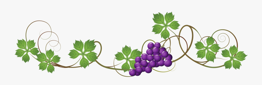 Vine Decoration Png Picture Grapes Vines.