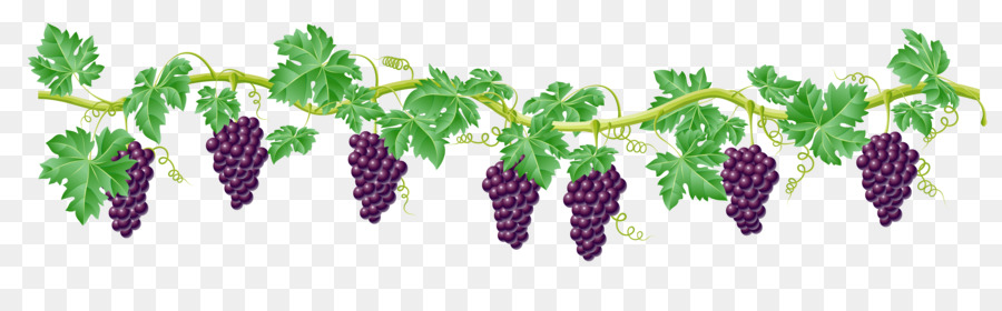 423 Grape Vine free clipart.