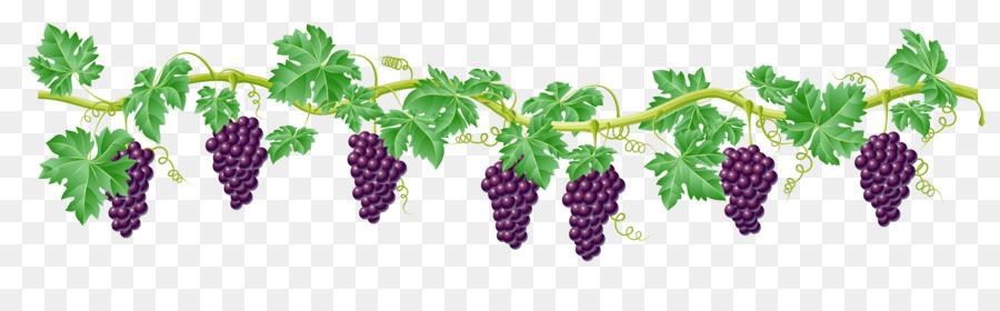 423 Grape Vine free clipart.