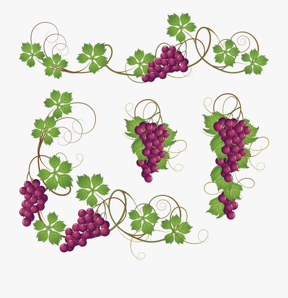 Common Grape Clip Art Grapes Transprent Png.