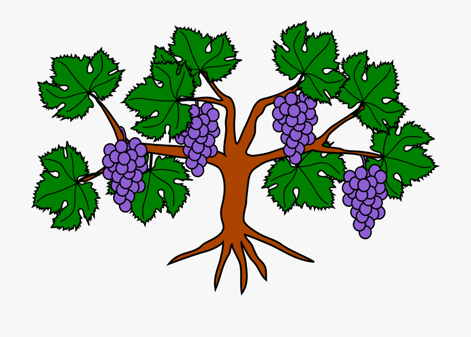 Grape Transparent Svg.
