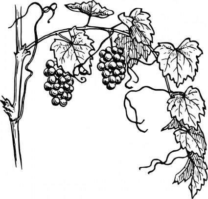 Grape vine clip art.