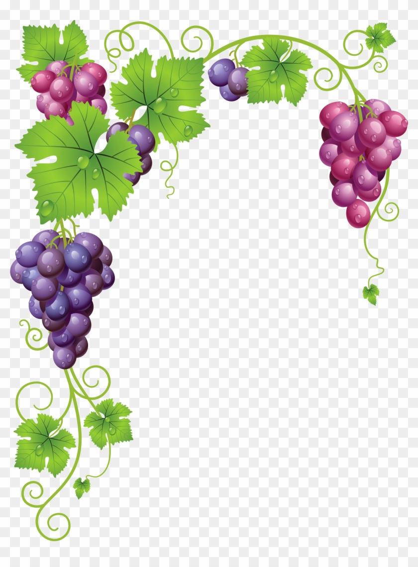 Graphic Grape Vine Clipart Free.