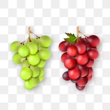Grapevine PNG Images.