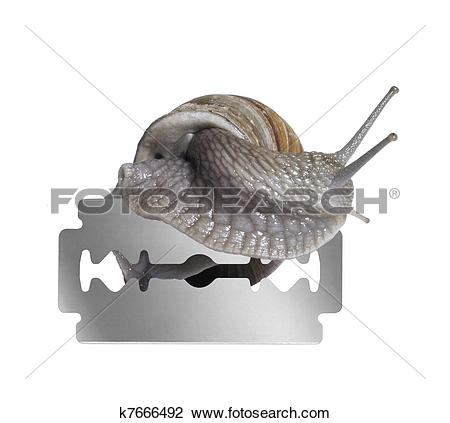 Stock Photo of Grapevine snail and razor blade k7666492.