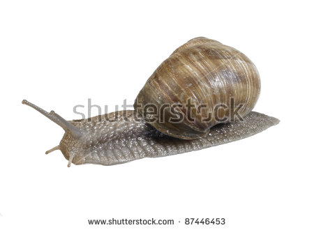 Grapevine Snail Stock Photos, Royalty.