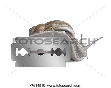 Stock Photography of Grapevine snail and razor blade k7614510.