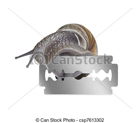 Stock Photo of Grapevine snail and razor blade.