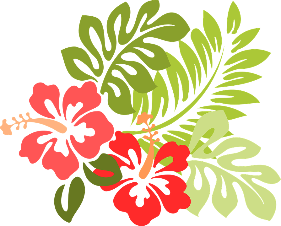 Hibiscus Graphics.