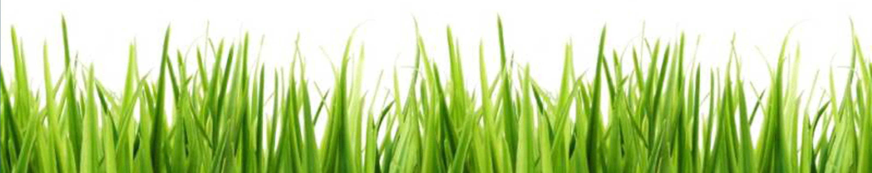 Grass Clip Art For Bulletin Boards.