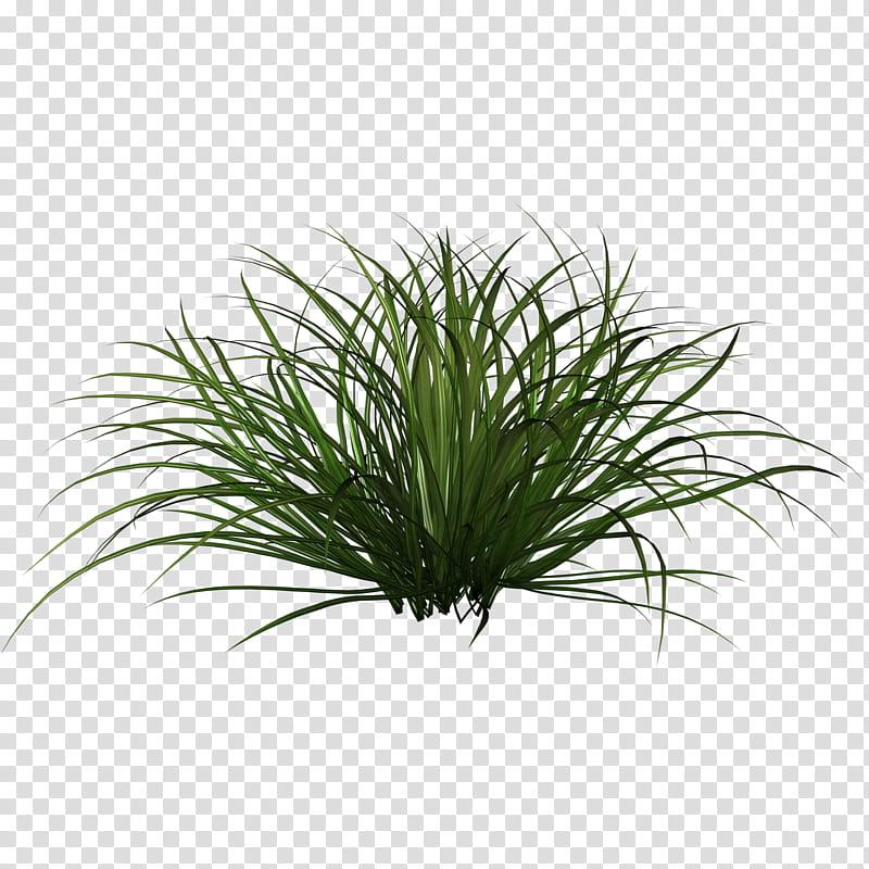 D Tall Grasses, green grass art transparent background PNG.