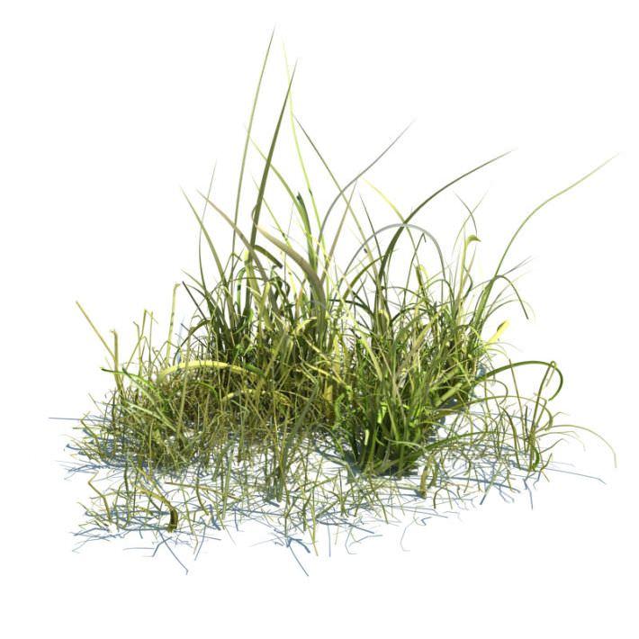 Tall Green Grass.