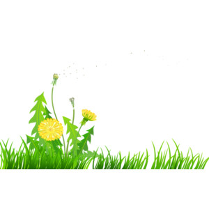 Grass with Dandelions PNG Clipart.