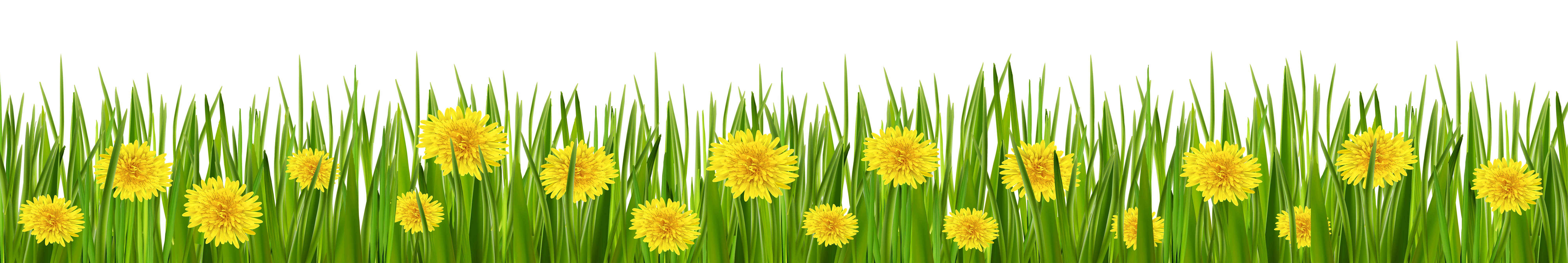Grass and Dandelions PNG Clip Art.