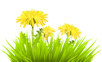 Grass With Dandelions stock vectors.