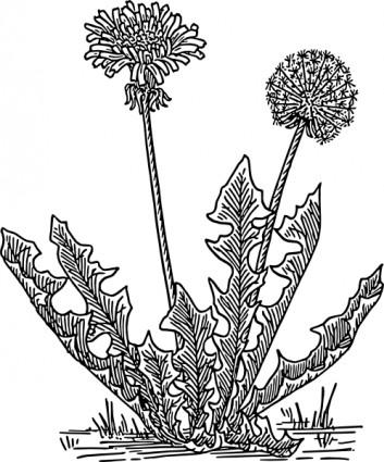 Dandelion Grass clip art.