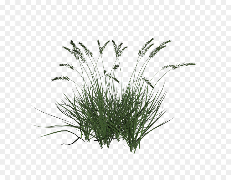 Grass Cartoon png download.