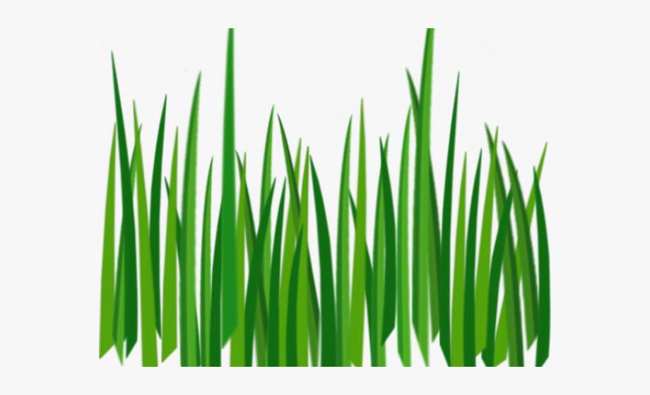 Drawn Grass Hd Cartoon.