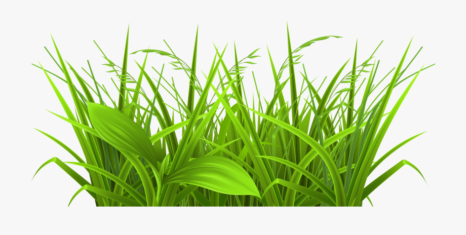 Grass Clip Art Free.