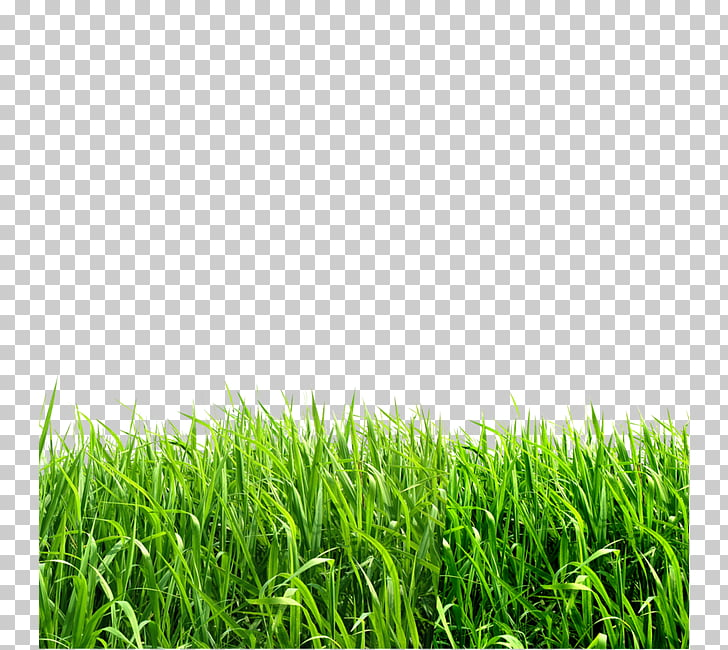 Grasses file formats , Creative green grass PNG clipart.
