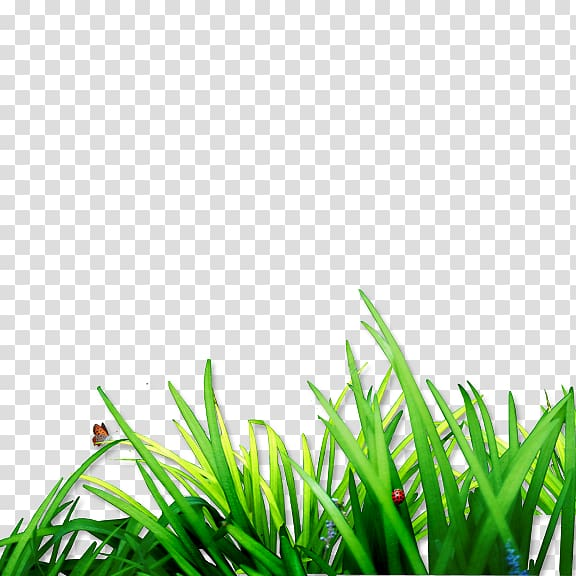 Lawn Computer file, Grass transparent background PNG clipart.