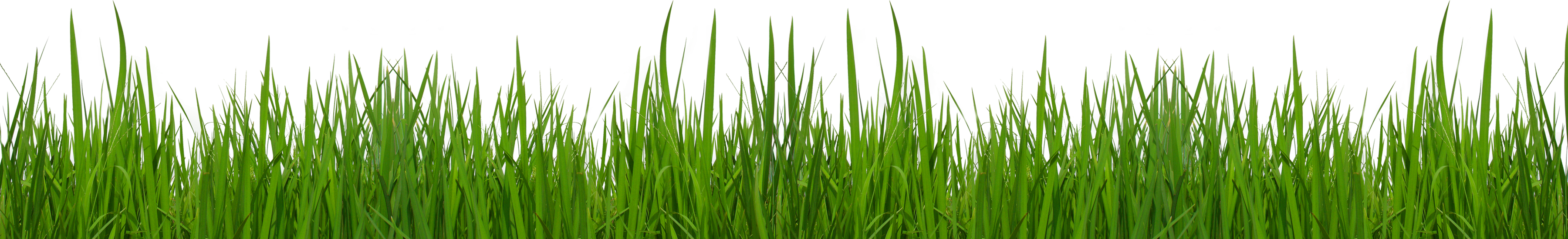 Free Free Grass Cliparts, Download Free Clip Art, Free Clip.