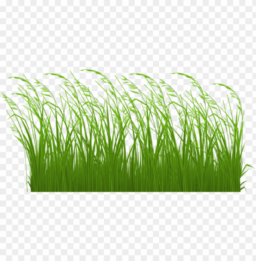 swamp vector grass clipart royalty free library.