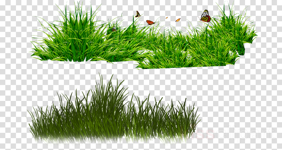 Grass, Plant, transparent png image & clipart free download.