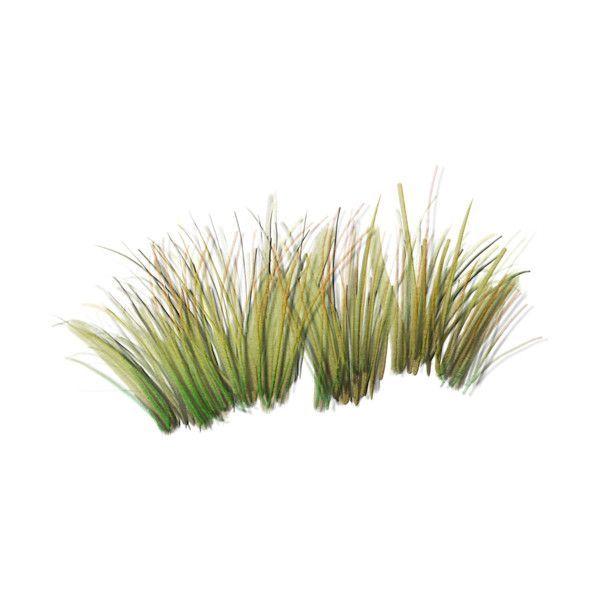 Grass clipart desert plant.