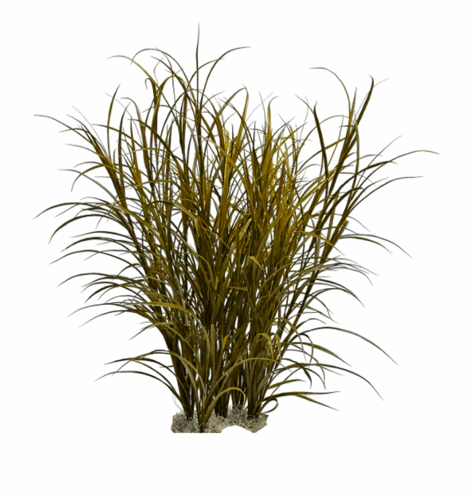 Ornamental Grass Png Png Download Tall Grass Photoshop.